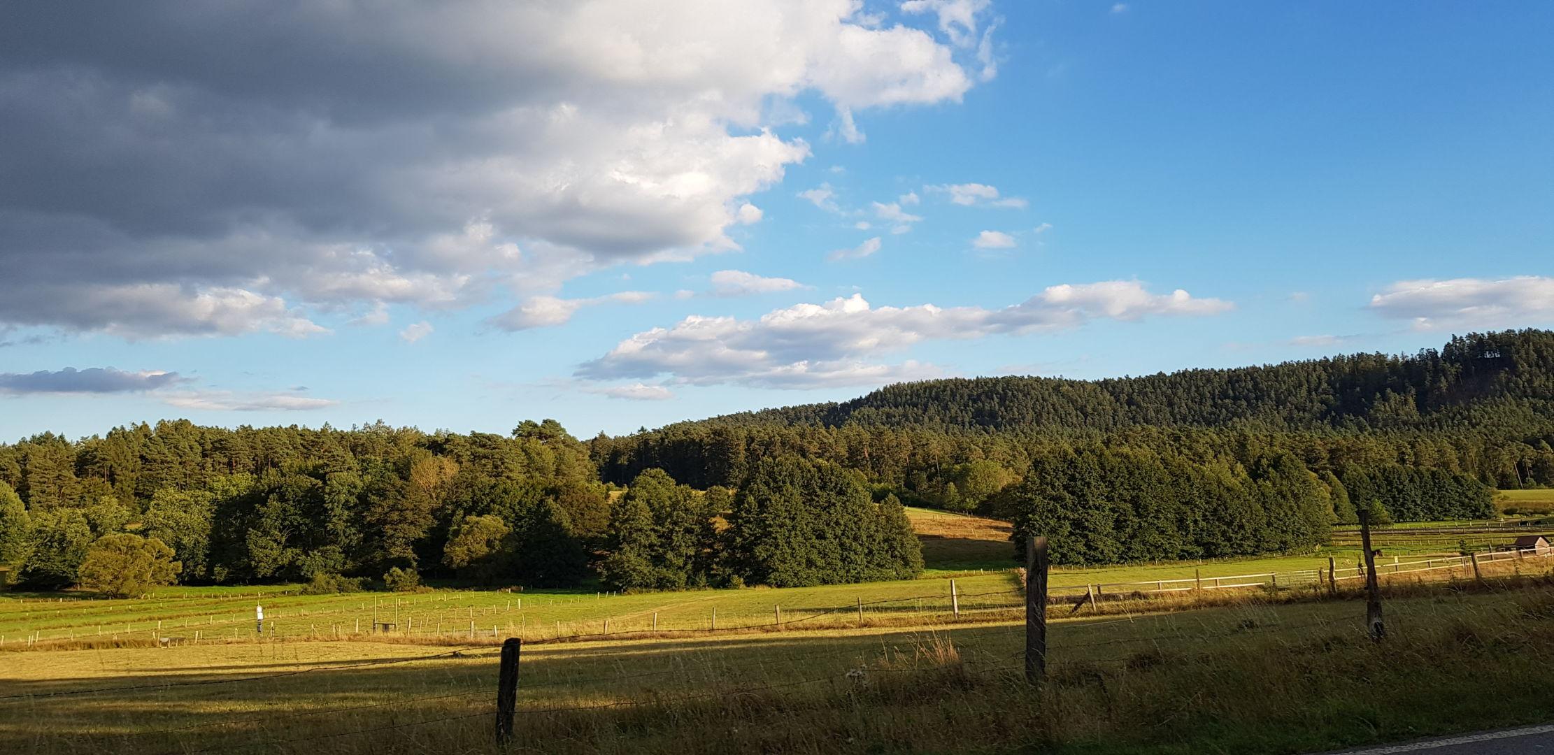 Der herbstliche Wald in Nordhessen